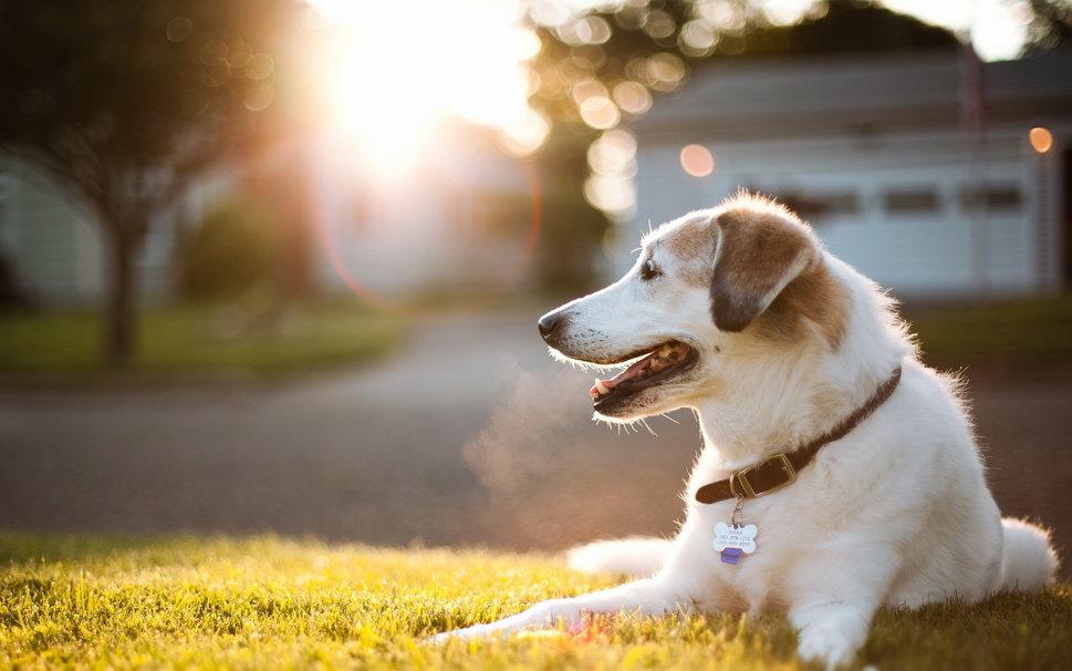 177829__cute-dog_p