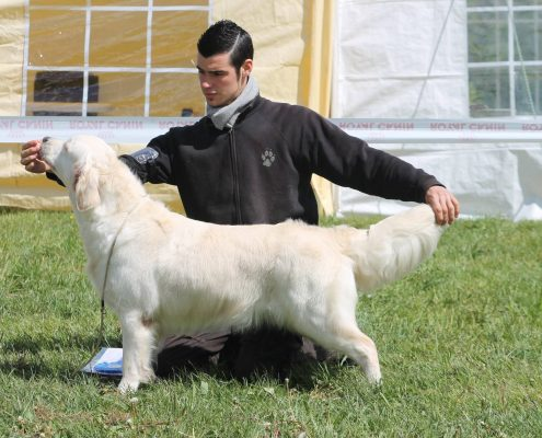 expositions canines