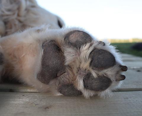 coussinet-chien