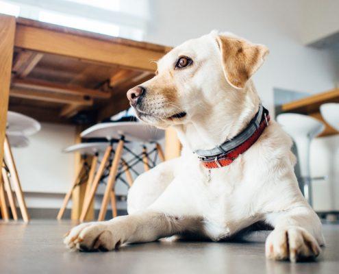 occuper-son-chien à la maison