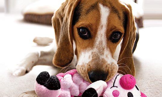 Quel jouet pour mon chien