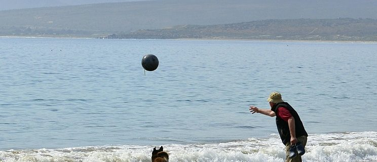chien qui joue à la plage