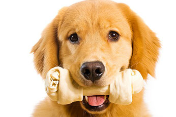 friandise-chien