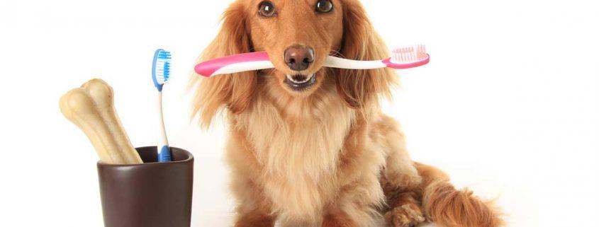 Chien-brosse-à-dent