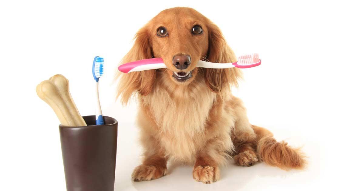 L'hygiène bucco-dentaire chez le chien - Ecole du chien