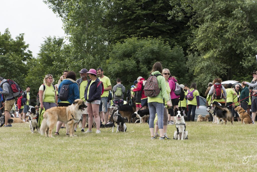 randonnees canines 14