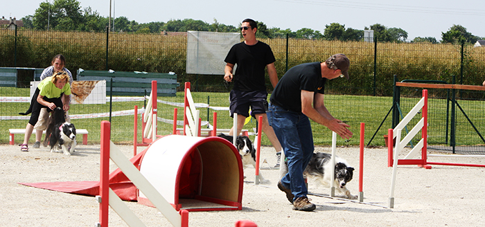 agility chien 14