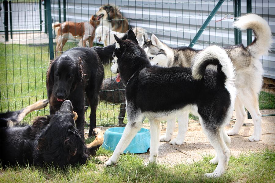 La garderie canine du mercredi à l'école du chien - Ecole