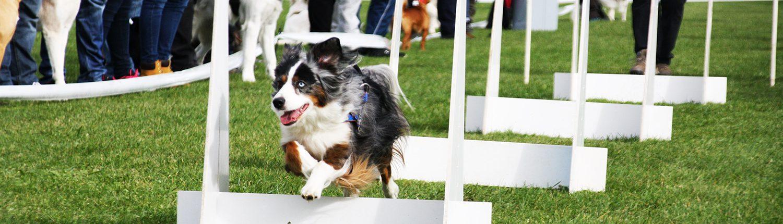 sport-canin ecole du chien