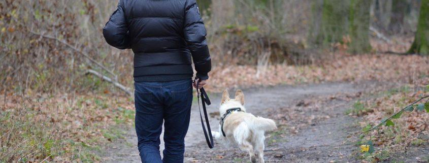 Le rappel du chien - Ecole du chien
