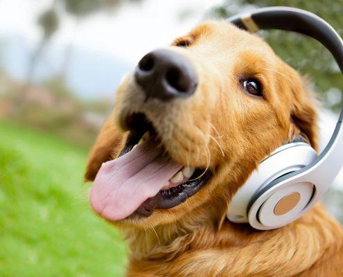 les chiens et la musique