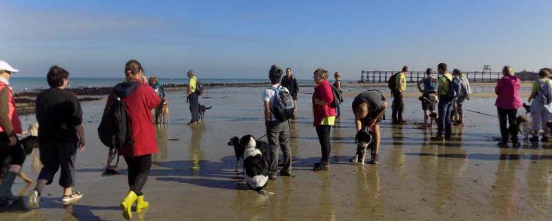 randonnee-chiens-plage