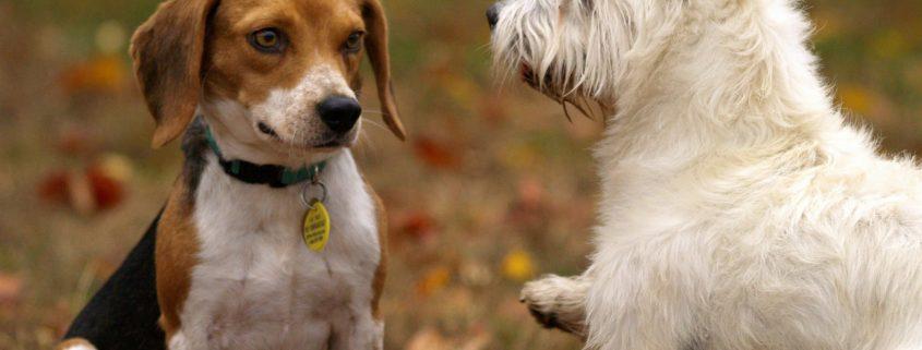 rencontre entre un chien adulte et un chiot rencotre sexe